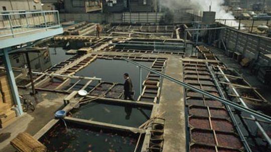 How Aquaculture Works