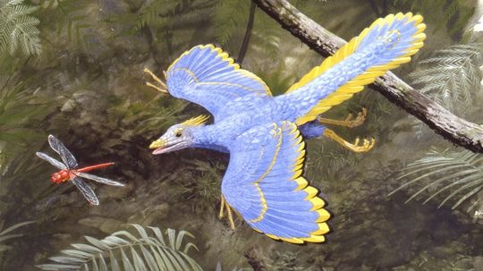 Scientists Unearth Another Archaeopteryx, an 'Icon of Evolution'