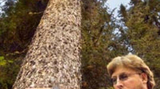 How Arborists Work