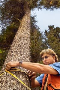 Arborists are tree care experts, providing many services that include planting, maintaining, saving and removing trees.