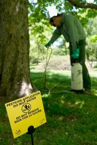 Arborist John Massing sprays pesticide at the base of a horse chestnut tree in Central Park in New York City.