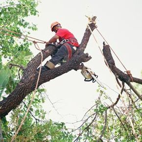 The International Society of Arborists certifies professional arborists in several levels of professional skills.