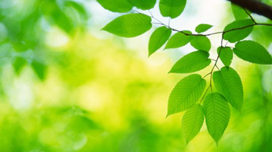 How Artificial Photosynthesis Works