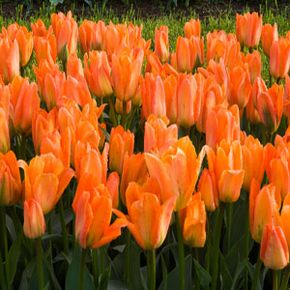 One of the first economic bubbles revolved around the tulip. See images of better ways to invest your money.