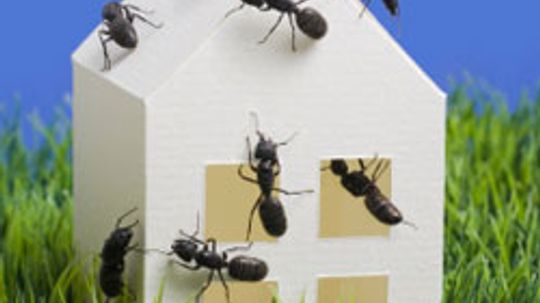 How to Keep Your Home Bug-free in the Summer