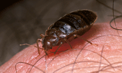 Before, during, after ... it's almost always a good time to wash clothes to prevent or kill bed bugs.