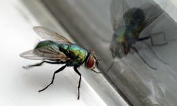 Ready to get the creepy-crawlies out of your house? See more insect pictures.