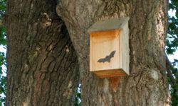 A bat house