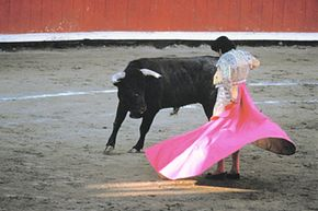 The ritual of the bullfight entrances some and horrifies others.