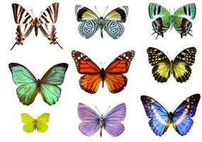 Butterfly wings come in a variety of colors and patterns.