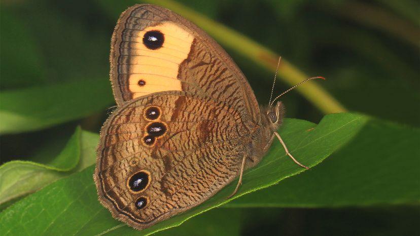 butterflies, hearing
