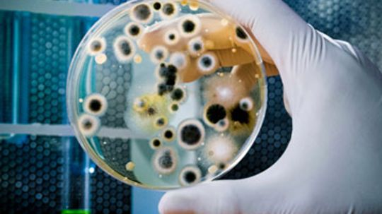 How do bacteria communicate?