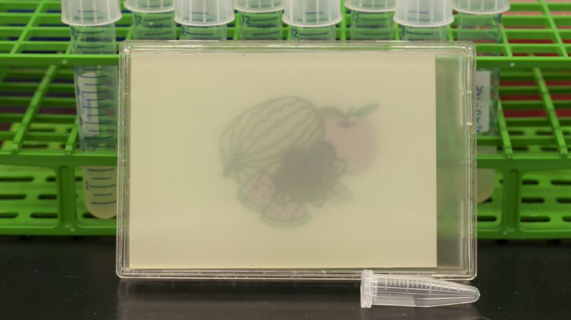 What would Paul Cezanne make of that fruit still life produced by microbes? Felix Moser (MIT)