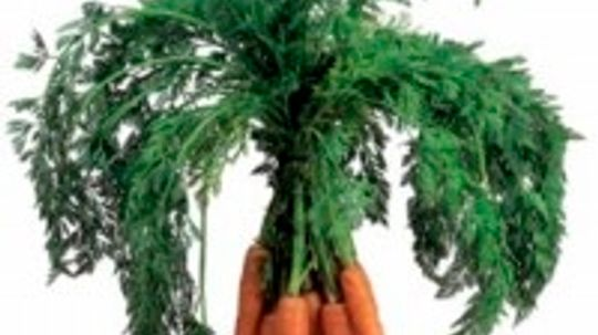 Baby Carrot Tips