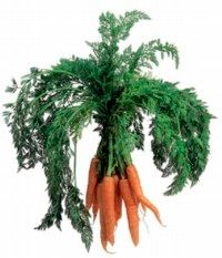 Baby carrots, or matchstick carrots, add lend body to dishes.