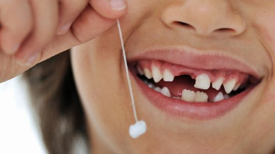 In what order do babies' teeth fall out?