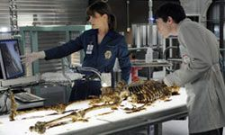 """The cast of """"Bones,"""" and most other CSI shows, have unlimited resources and access to futuristic technology."""