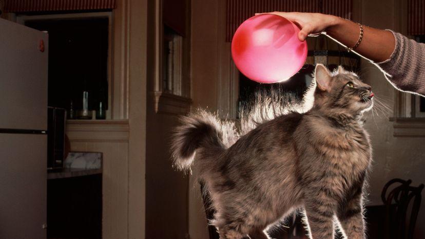 cat fur sticking up