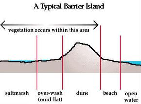 Various zones of a typical barrier island