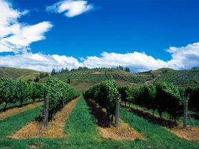 The Bay of Plenty in New Zealand is known for its many wineries and restaurants. See our collection of wine pictures.