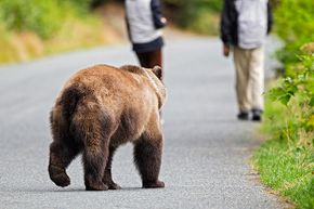 Running away from a hazard always seems like a good idea in the movies. But not so much in real life. See pictures of brown bears.