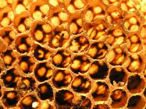 Each cell in the comb of a bee hive can hold honey or a single developing bee.