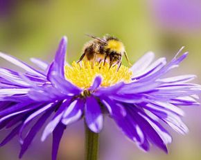 Flowering plants need the help of pollinators, like bees, to reproduce.