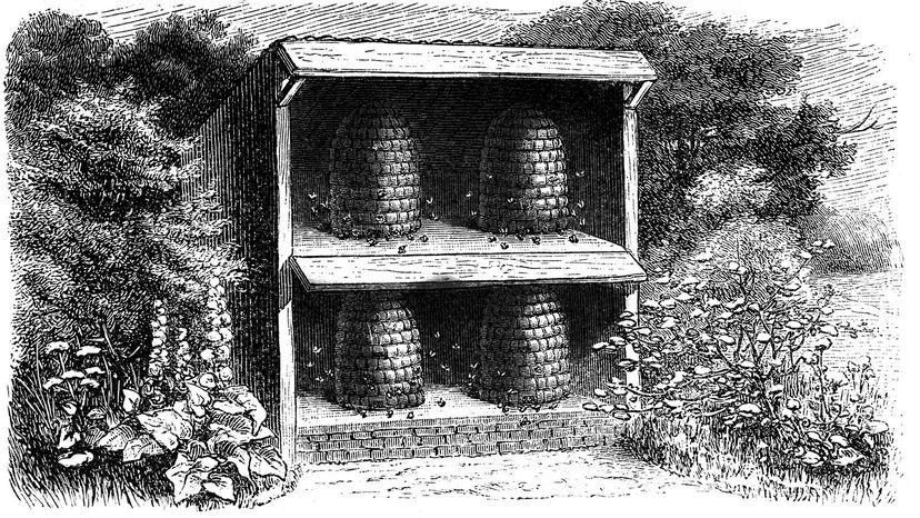 history, beekeeping