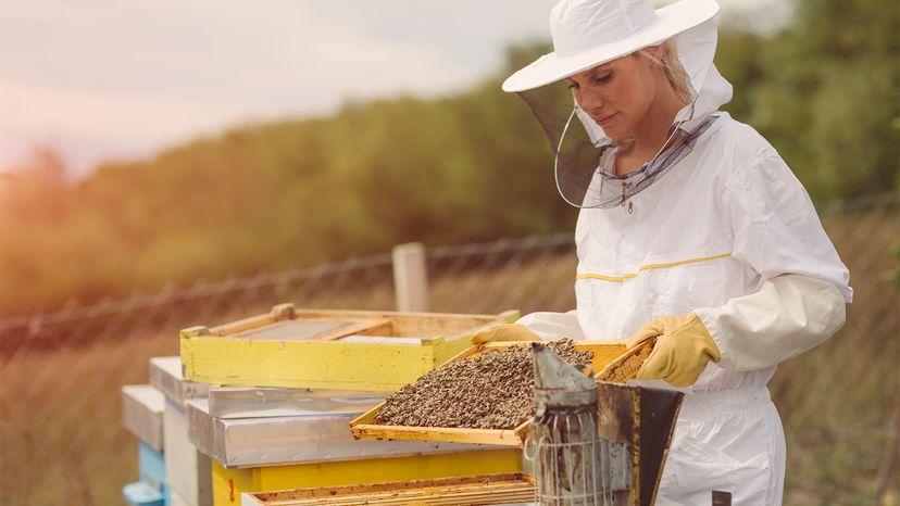 hive, management