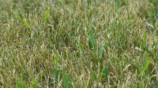 Is there a benefit to crabgrass?