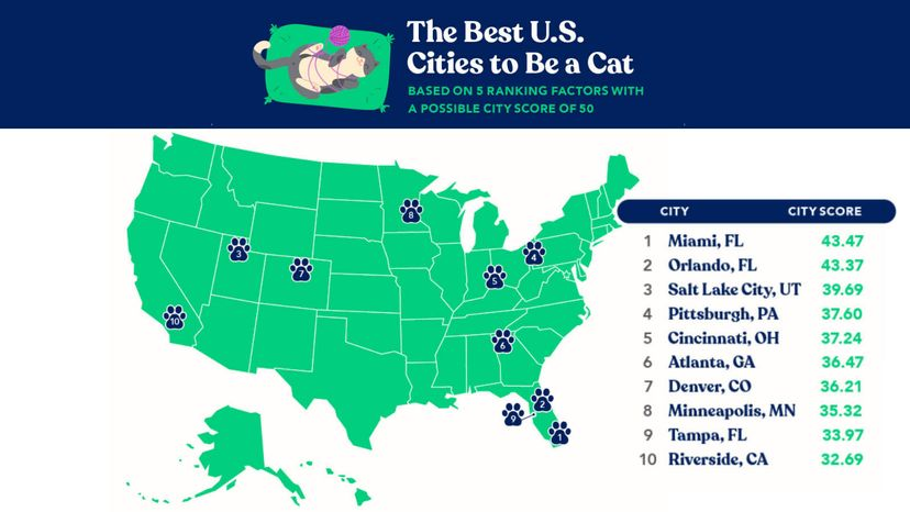 best city for cats