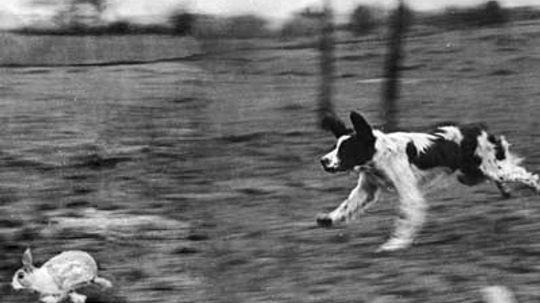 What is the best hunting-dog group and why?