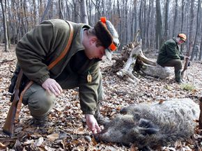 Much of the appeal of hunting big game like wild boar comes from the risk and thrill of hunting large animals.