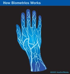Vein scanners use near-infrared light to reveal the patterns in a person's veins.