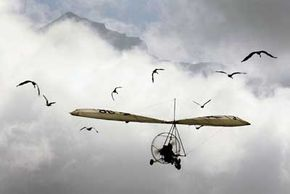 Human attempts to create effective flying machines often involved studying how birds fly.