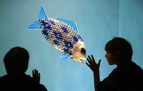 The biomimetic technology behind this robot fish is based on the common carp. The robot navigates and propels itself through water with its fins, just like a real fish.