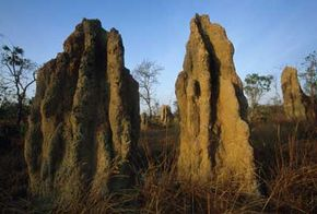 These cathedral termite mounds in Australia might not attract apartment hunters, but architects have already used the termites' self-cooling designs in the construction of energy-efficient buildings.