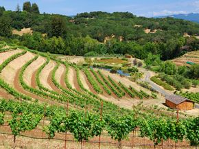 In order to become certified biodynamic, a farm must first be certified organic.