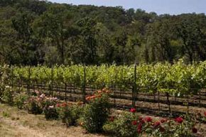 Different plants affect the soil in different ways, which is something that can be taken advantage of in biodynamic viticulture.