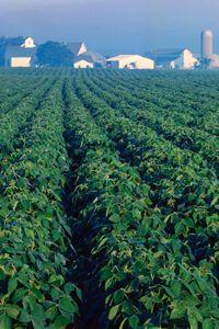 A soybean field on a farm in LaSalle County, Ill.