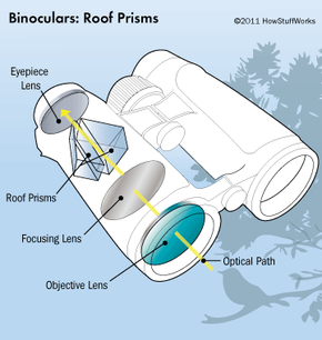 Illustrated here are roof prism binoculars, one of the two main types of binocs you'll encounter in your search for the perfect pair.