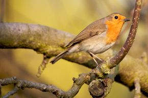 Catchlight helps bring a bird's eyes to life.