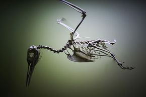 What came first, the dinosaur or the bird? See more dinosaur pictures.