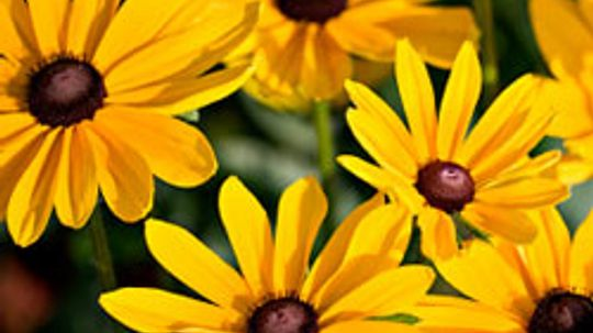 Top 5 Perennials of the West