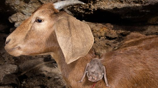 Meet the Real Vampires of the Animal Kingdom