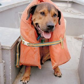 Safety should always be a main concern when boating with your pet. Check out these pet pictures.