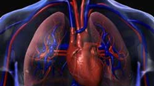 Would an ultrasound help detect fluid in the lungs?