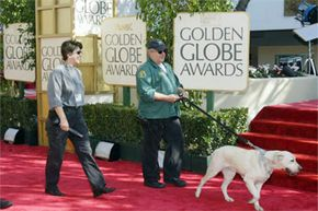 That canine is really working the red carpet at the annual Golden Globe Awards, sniffing for bombs that is.