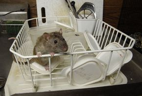 BPA disrupts the normal fetal development of mice; does that mean we can expect the same effects in humans?