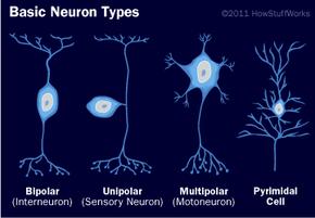 Meet the neurons!